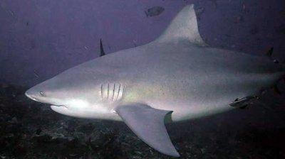 Плувец извади късмет, бича акула му сви само плавника