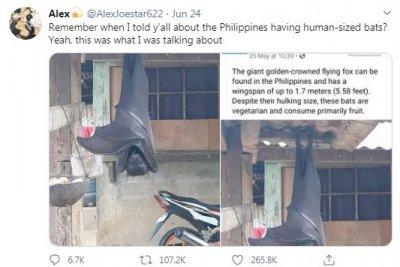 Прилеп с човешки ръст уплаши Филипините