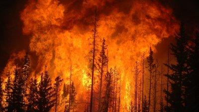 Невиждан пик на пожарите в Амазонската джунгла