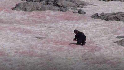 Розов ледник се появи в Алпите