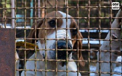 Продават кучета за ужасяващи експерименти (СНИМКИ 18+)