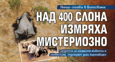 Нещо става в Ботсвана: Над 400 слона измряха мистериозно