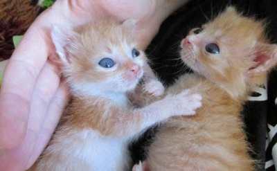 Добрата новина: Пожарникари спасиха новородени котета