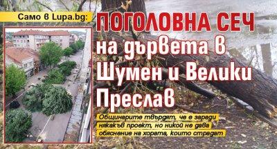 Само в Lupa.bg: Поголовна сеч на дървета в Шумен и Велики Преслав