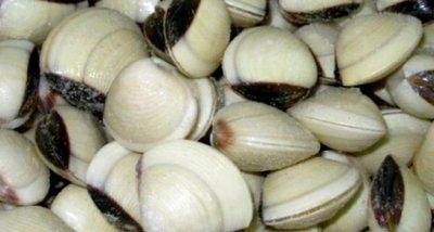 Забраняват улова на бяла мида