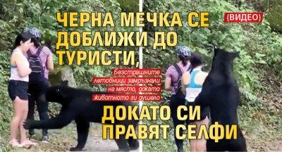 Черна мечка се доближи до туристи, докато си правят селфи (ВИДЕО)