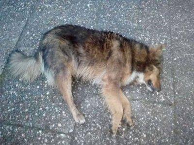 Жестокост: Пловдивчанин заля кучето си с киселина