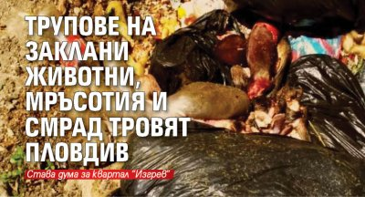 Трупове на заклани животни, мръсотия и смрад тровят Пловдив