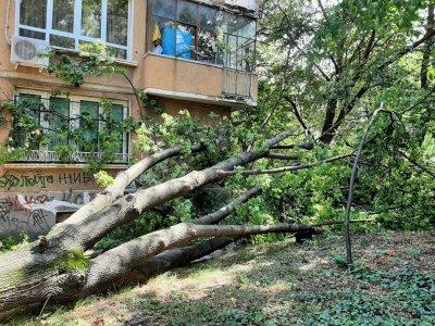 Разчистват съборени от бурята дървета в София (СНИМКИ)