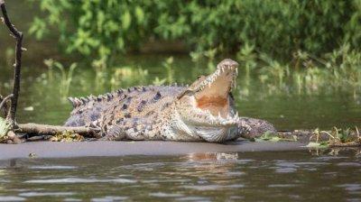 Отплата: Крокодили изяли прочут бракониер