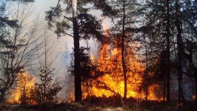Пороят спаси 3000 дка борова гора от изпепеляване