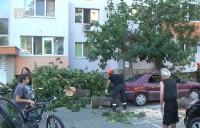Дърво падна върху шест коли в Бургас