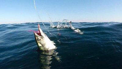 Рибарите във възторг: Циганката дойде