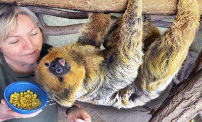 Почина най-старият ленивец в света
