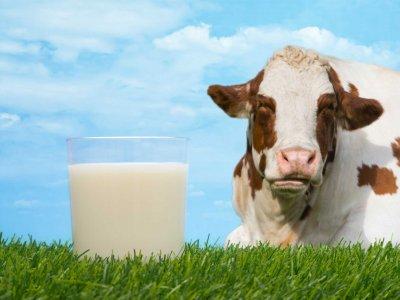 Кое е полезното мляко – А1 или А2?