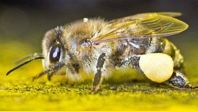 Джиесемите избиват насекомите в Европа?