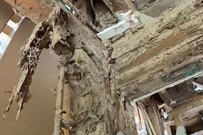 Термити изядоха дом за половин милион долара