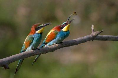 Отбелязват Европейските дни на птиците в Южния парк