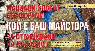 Само в Lupa.bg: Маниаци спорят кой е Баш майстора за отглеждане на канабис