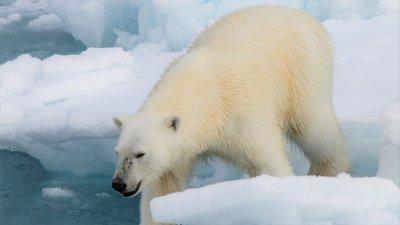 Катастрофа в дивата природа: Хората са затрили 60% от животинските популации