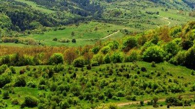 Изгубени деца бяха намерени в Лозенска планина