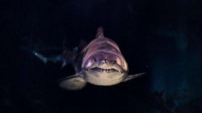 Бременна спаси съпруга си от нападение на акула