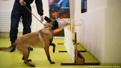 Кучета надушват пациенти с COVID-19 на летище в Хелзинки