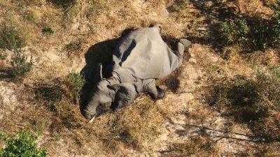 Глобалното затопляне убива слоновете