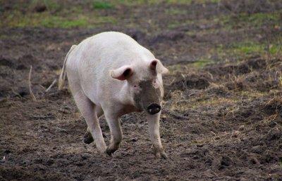 10 смайващи факта за животните