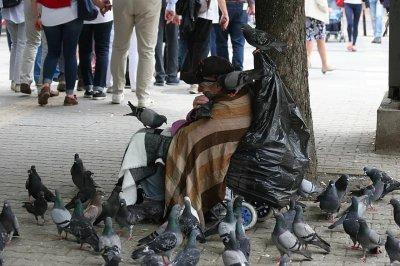 Не пипайте гълъбите: Всеки 2-ри пренася опасни бактерии