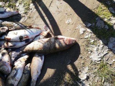 Мъртва риба в Тунджа, прокуратурата се сезира