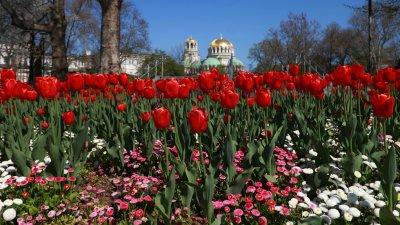 200 000 лалета красят София през пролетта
