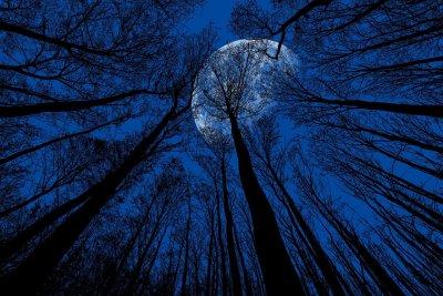 Иде Синя Луна, Денят на мъртвите