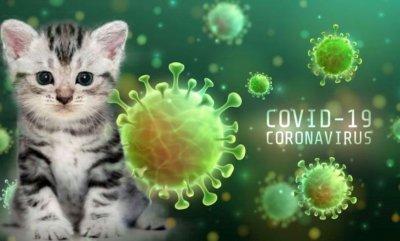 Лекарство за котки бори и COVID-19?