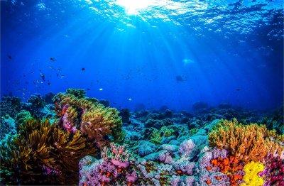Учени откриха коралов риф, висок 500 метра