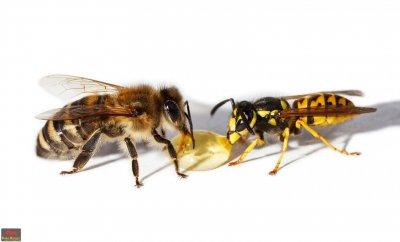 Вадят 6,4 млн. лв. за пчеларите