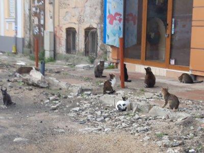 В Бургас пропищяха от бездомни котки