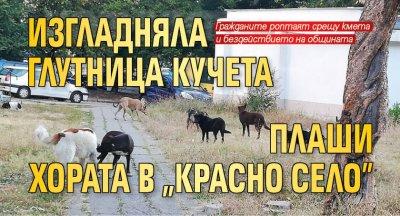 """Изгладняла глутница кучета плаши хората в """"Красно село"""""""