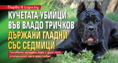 Първо в Lupa.bg: Кучетата-убийци във Владо Тричков държани гладни със седмици
