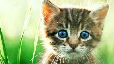 Разследват убийството на 8 котета