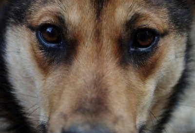 Мъчител на куче получи обвинение от прокуратурата в Козлодуй