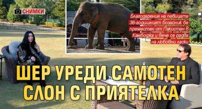Шер уреди самотен слон с приятелка (СНИМКИ)