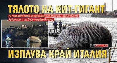 Тялото на кит-гигант изплува край Италия (снимки)
