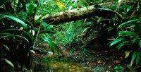 Ето какво измисли НАСА, за да спаси джунглите